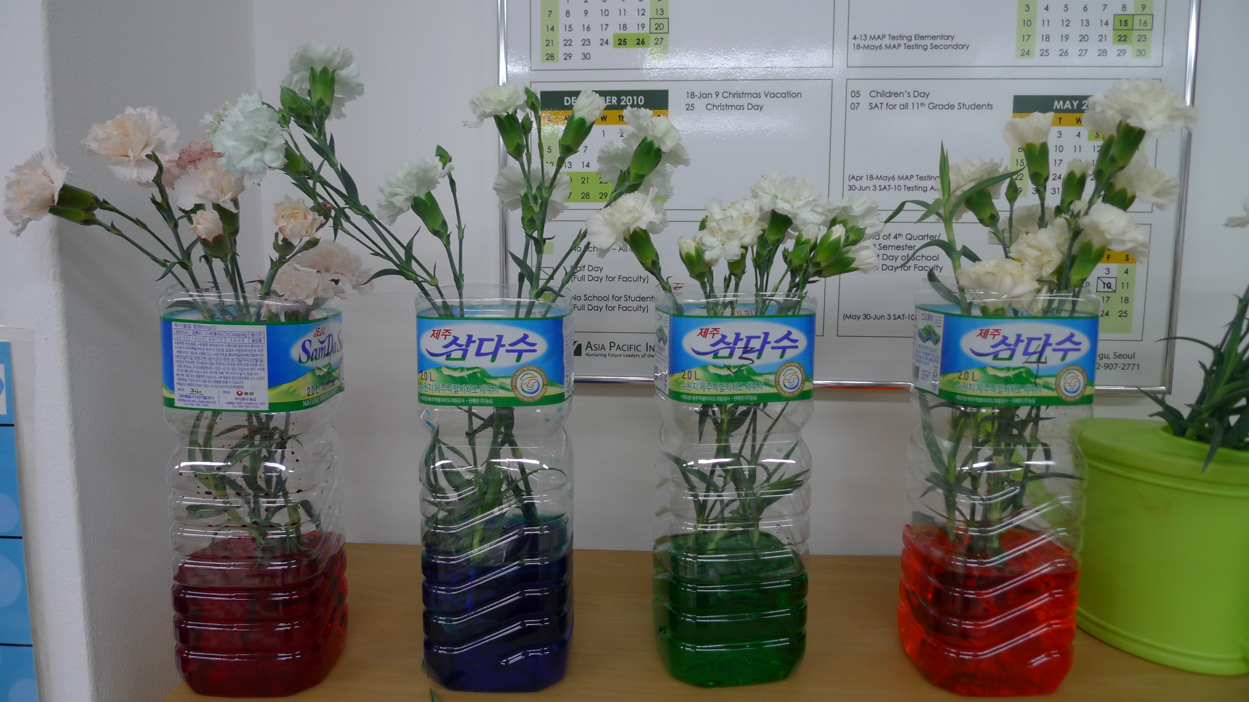 Color Flowers With Food Coloring Flower Food Coloring
